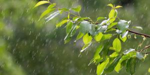 deszcz, liście