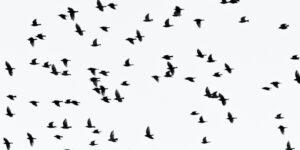 wiele ptaków